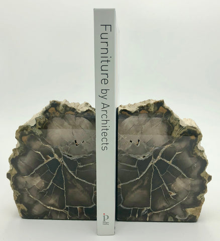 Fossilized Wood Bookends - Small