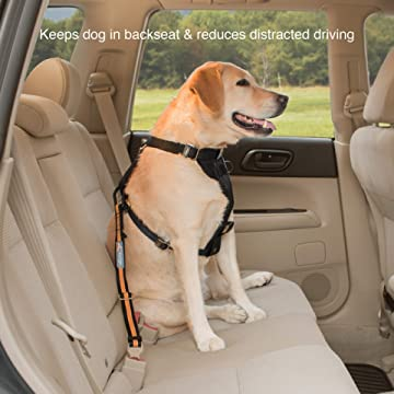 Direct to SeatBelt Dog Tether