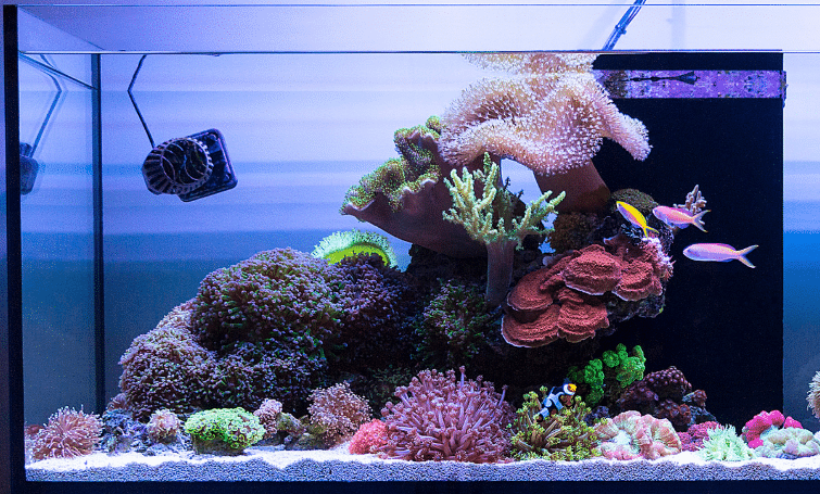 How to Clean Sand or Gravel for the Aquarium