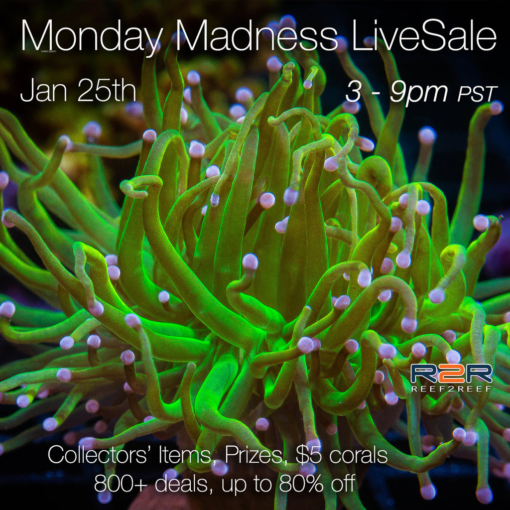 LiveSale Monday Madness - Jan 25th 3 to 9pm PST - over 800 corals!