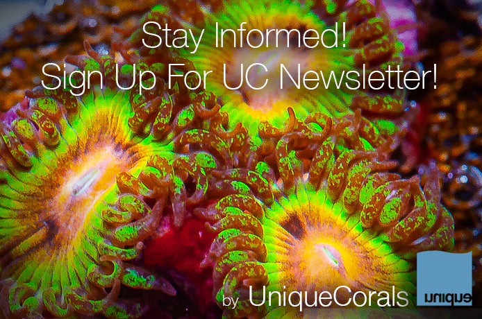 Sign up for the UniqueCorals.com Newsletter and get all the latest news and deals!