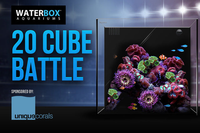 Waterbox Aquarium 20 cube battle build out