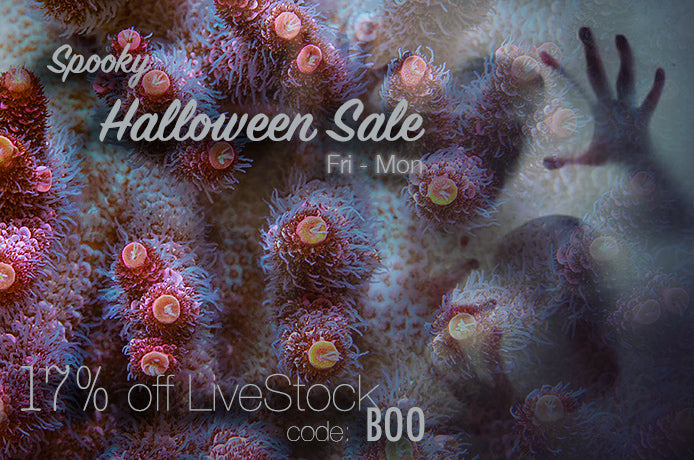 Spoooooky Halloween Sale! Friday Oct 30th to Monday Nov 2nd