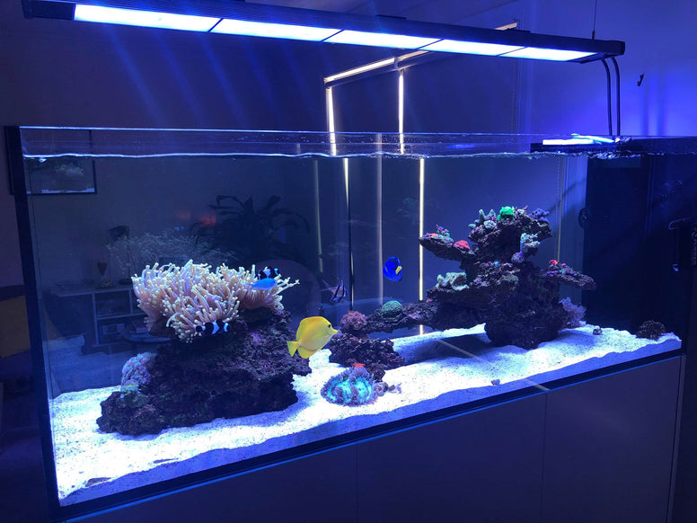 ILLUMAGIC BLAZE X-150 ( 5 FT) LED Aquarium Lighting