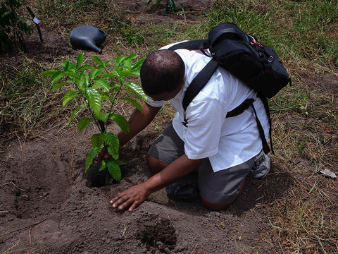 tree planting reforestation