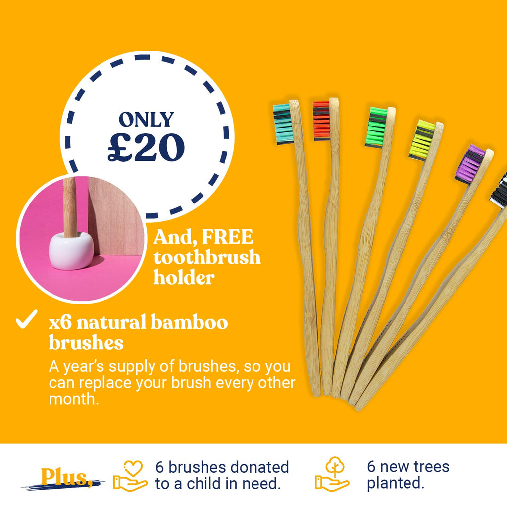 Curvy Bamboo - Year's Supply (Adult) - [Subscribe & Save] - FREE Brush Holder