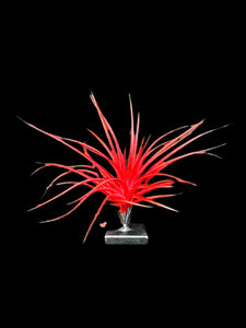 Red Enhanced Tillandsias