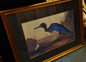Blue Heron Bird Audubon Framed Print