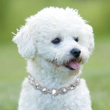 Rhinestone Bling Dog Necklace Collar Jewelry Pearl Diamond Pet Puppy Cat Necklaces For Small Dogs Mascotas Dog Accessories