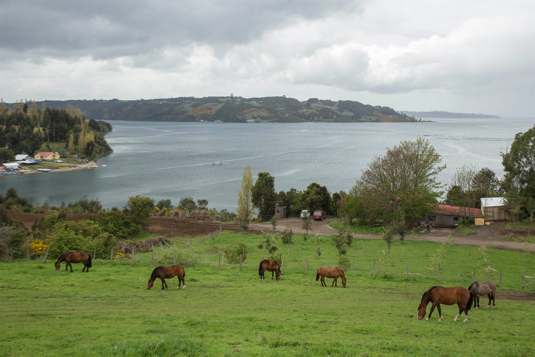 Tierra Chiloe Adventure and Spa Hotel, Chile