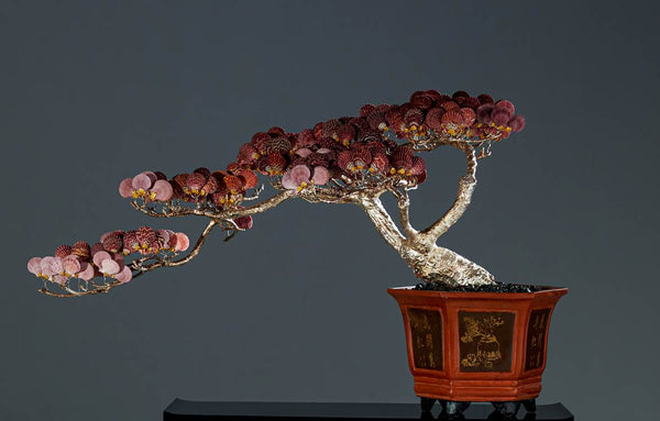 Bonsai Tree with Scallop Shell