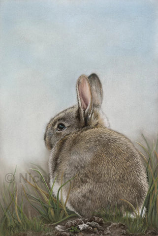 Cottontail print