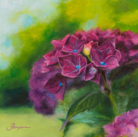 Hydrangeas in the Summer - Giclee Print
