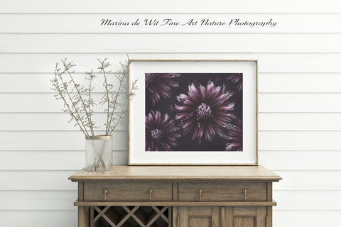 Purple Dahlias print