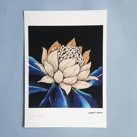 Warratah in bloom Print