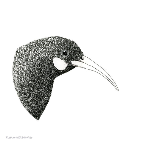 Huia Limited Edition Print