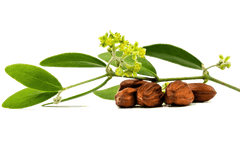 Jojoba Extract Benefits