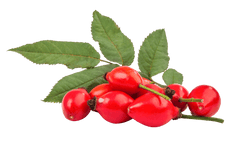 Rosehip Seed Benefits