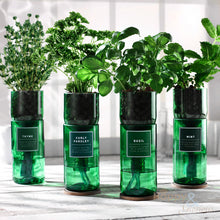 Thyme hydroponic organic herb growing kit