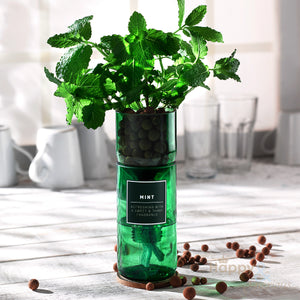 Mint hydroponic organic herb growing kit