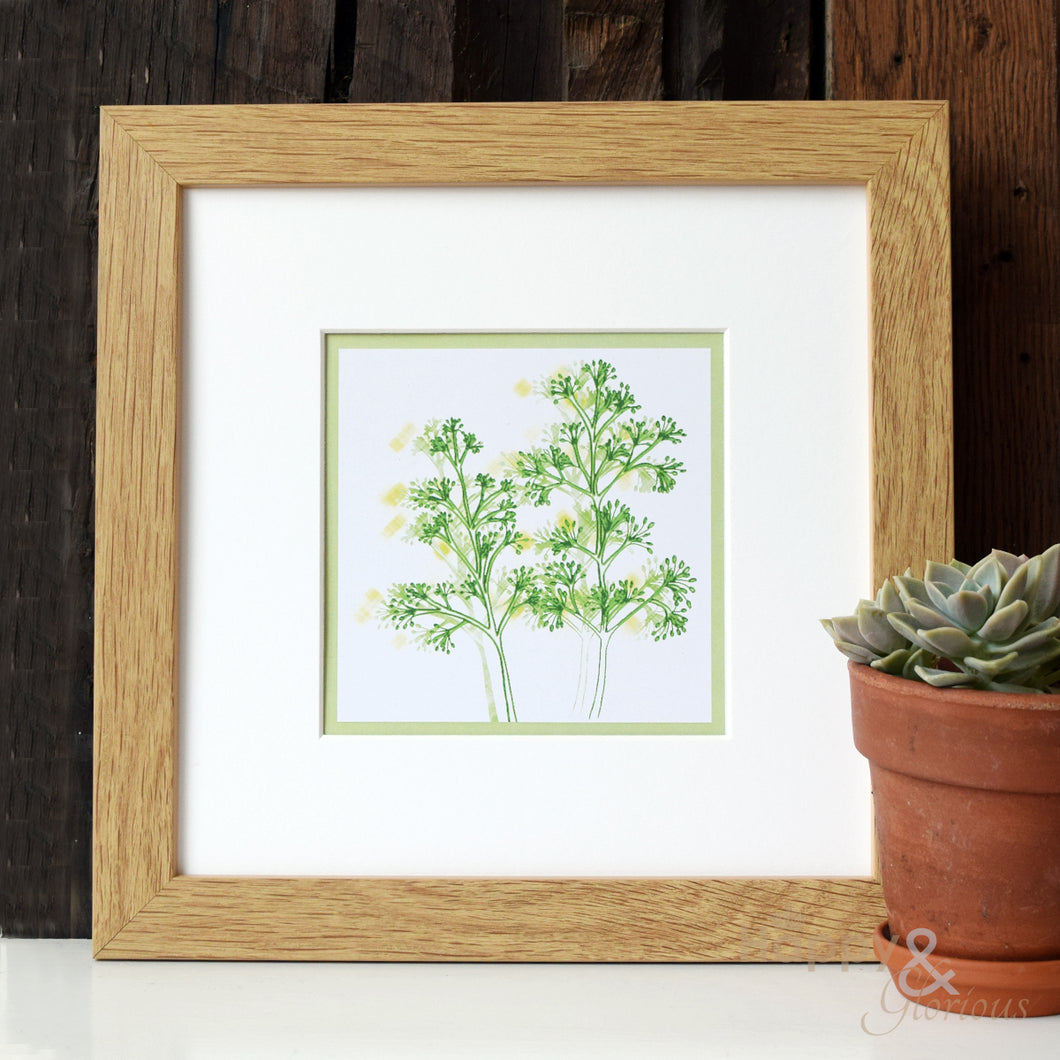 Skimmia Japonica 'Greenery' digital print by Kate Tompsett