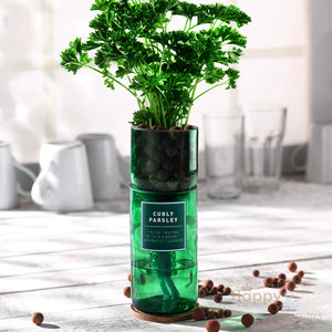 Curly parsley hydroponic organic herb growing kit