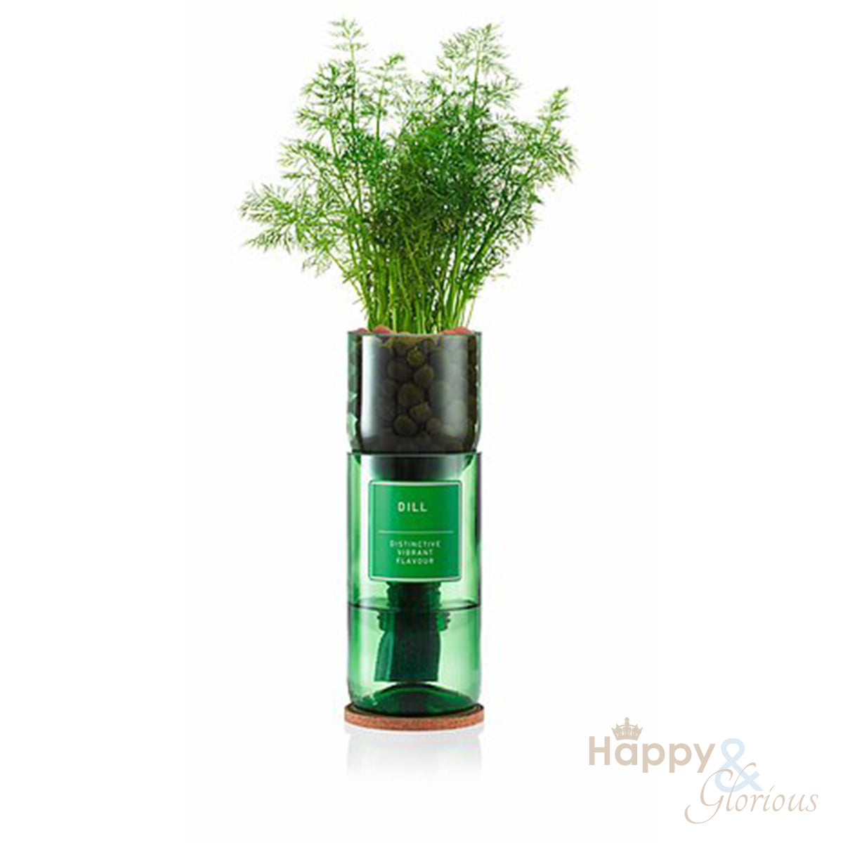 Dill hydroponic organic herb growing kit