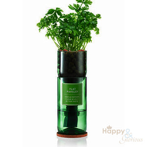 Flat Parsley hydroponic organic herb growing kit