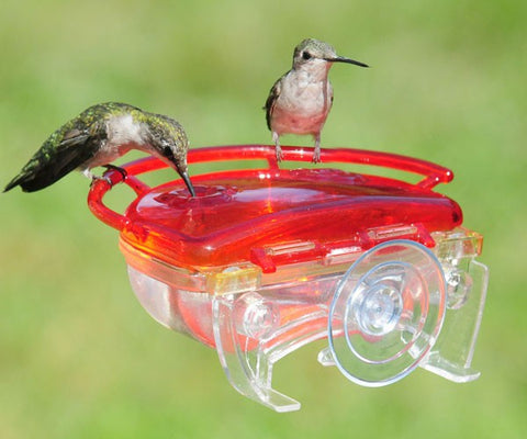 Mini View Window Hummingbird Feeder