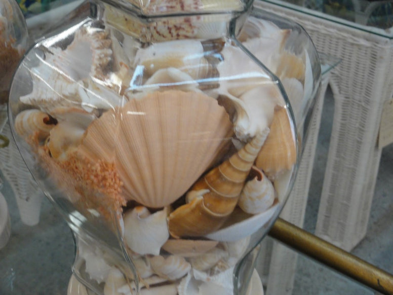 Amazing Sea Shell Ginger Jar Lamps