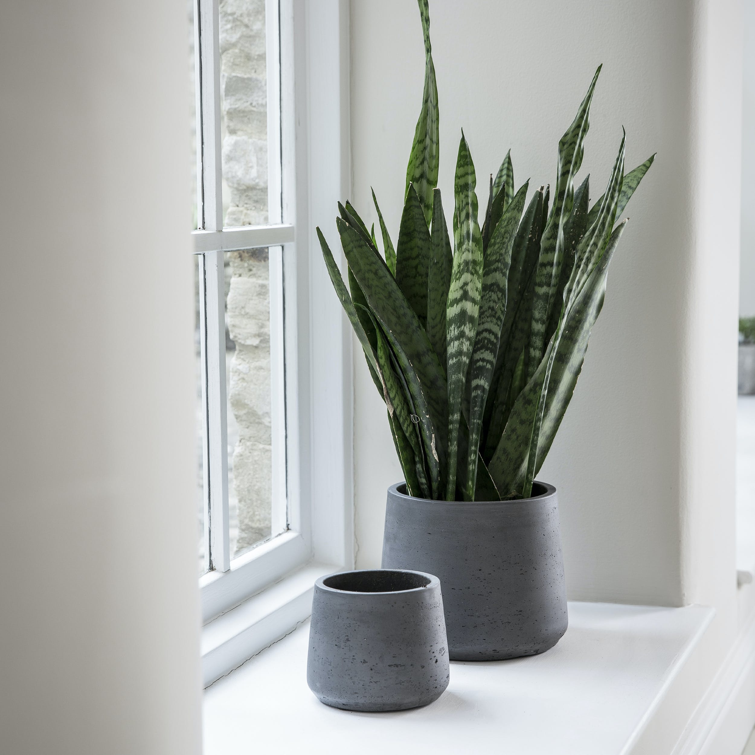 Cement Tapered Plant Pot in Carbon