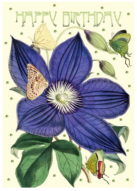 Birthday Card Clematis