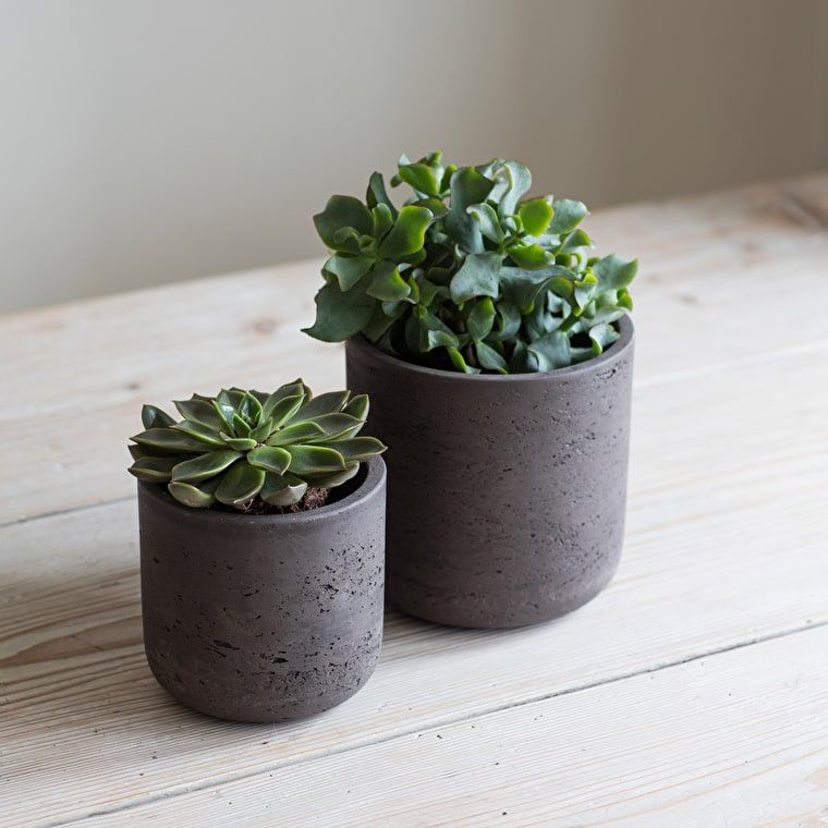 Cement Straight Plant Pot in Carbon