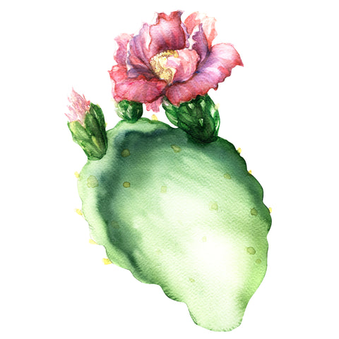 Prickly Pear Oil/Barbary Fig Oil
