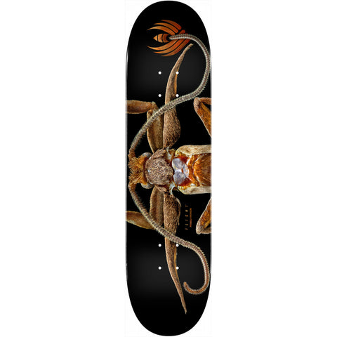 Powell-Peralta Flight Deck Marion Moth, Shape 243, 8.25""