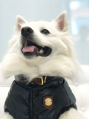 stylish dog jacket