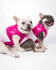 Frenchie in puffer jacket