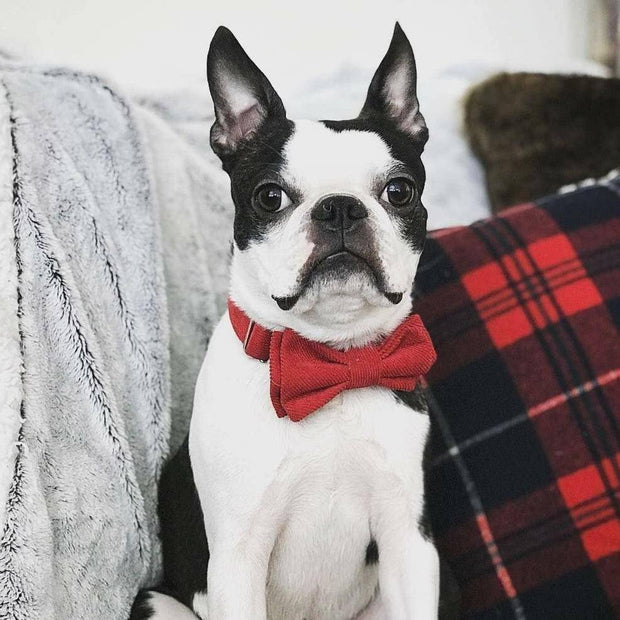 Bow Tie Dog Collar | Red Corduroy