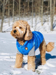 Puffer Jacket Blue - Wag Swag Brand Inc