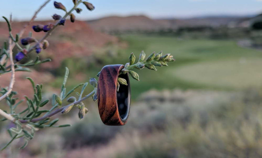 A cocobolo wood ring on a branch