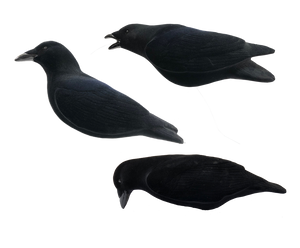 Last Pass Fully Flocked Crow Decoys, Pack of 3
