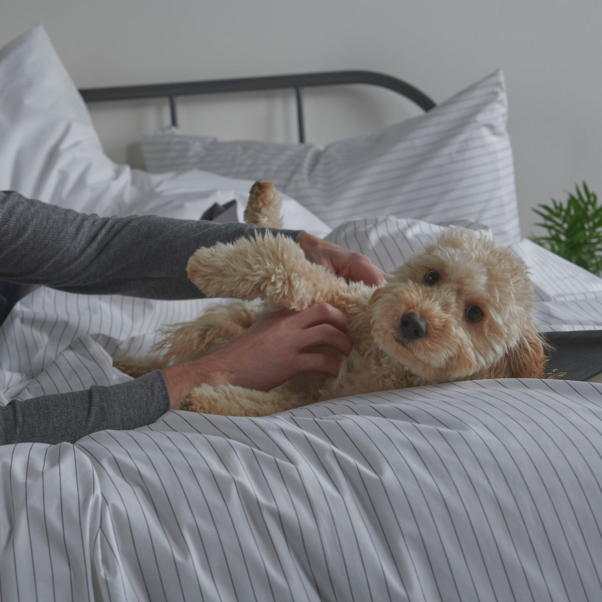 Man playing with dog on bed