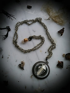 Toad~Spell Bone Reliquary Necklace~ Toad Rib Bones