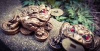 The Money Toad~Frog