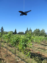 FruitDefender Deployed In A Vineyard To Scare Birds Away And Protect Grapes