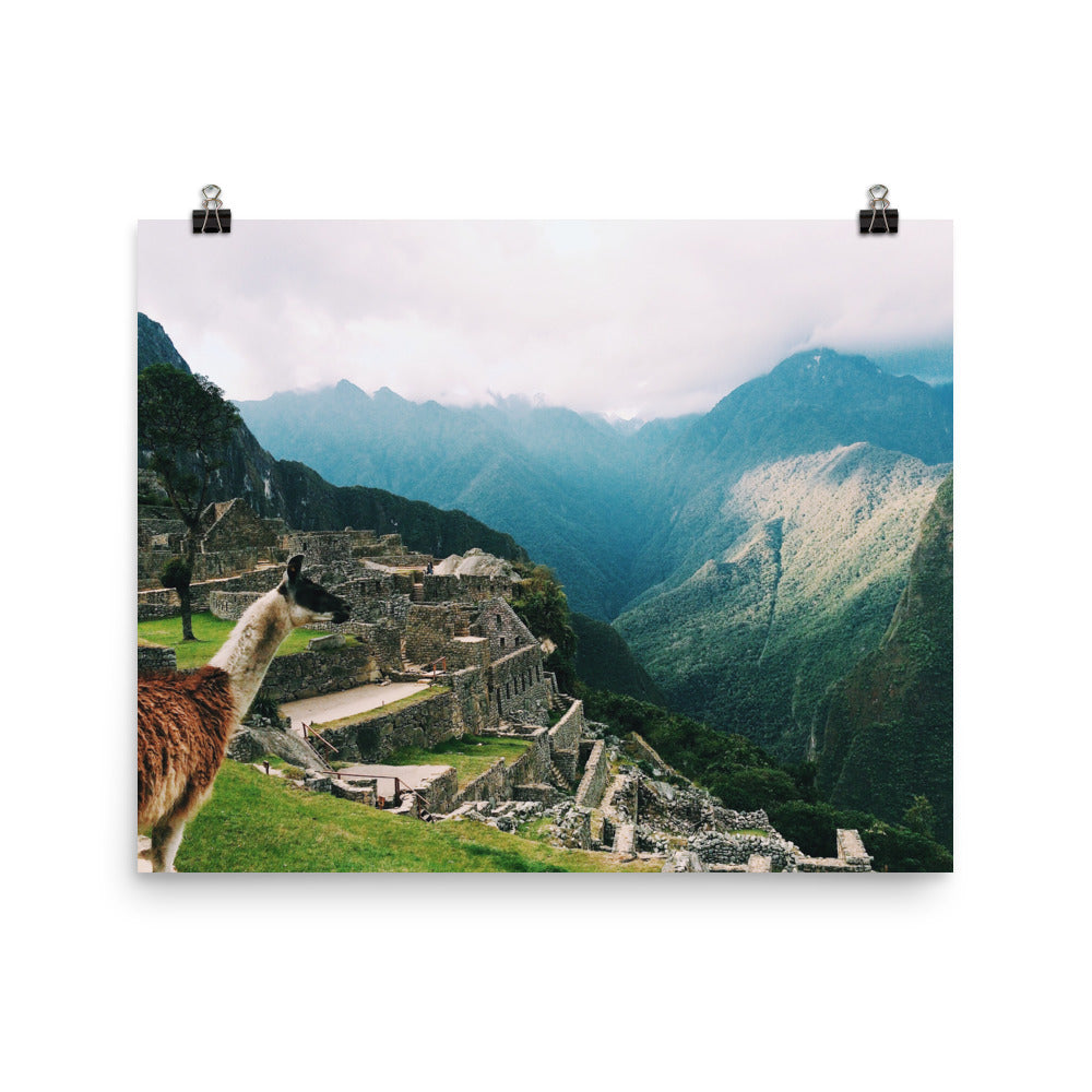 Llama No. 1 | Travel Photography Print