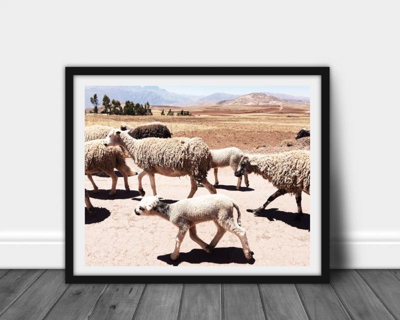 Sheep Wall Art | Photography for Animal Lovers | Bast + Bruin