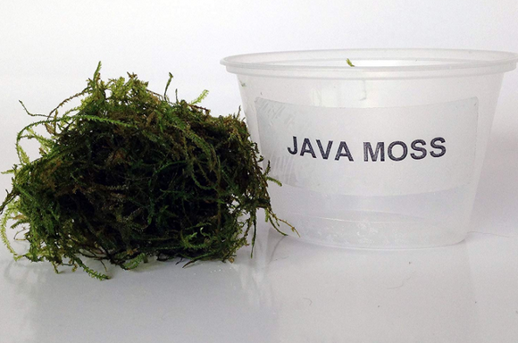 Java Moss 4 oz cup