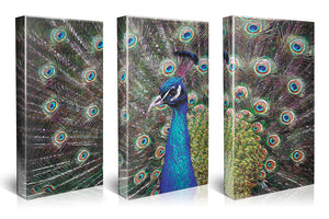 Multiple Panel Peacock Canvas Wall Art, Bird Painting, Animal Triptych