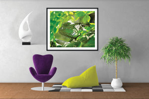 Lizard Wall Art
